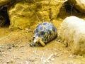 Londoni Állatkert - teknős