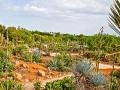 Mallorca - Botanicactus