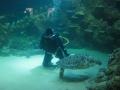 Teknősbéka etetés