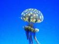 Medúza 1