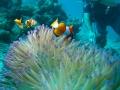 Bali - búvárkodás 04