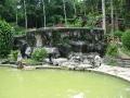 Bali - növényzet 02