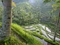 Bali - teraszos rizsföld 01