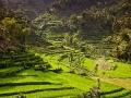 Bali - teraszos rizsföld 03