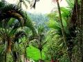 Bali - Gunung Kawi