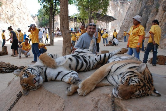 Thaiföld Tigris Templom (Tiger Temple)