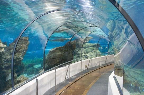 Barcelona Akvárium