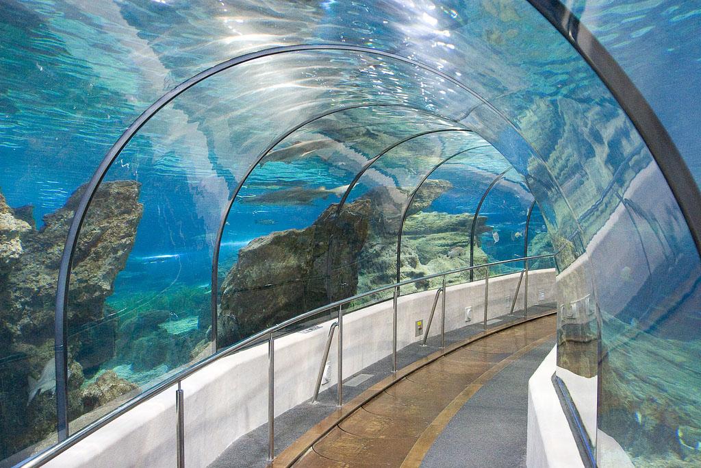 Barcelona akv rium g tikus negyed barcelona l tnival k for Aquarium de barcelona