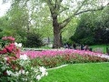 Szent Jakab Park tulipánok