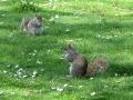 Szent Jakab Park mókusok