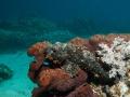 Bali - búvárkodás 03