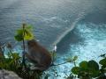 Bali - állatvilág 01