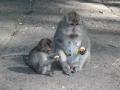 Bali - állatvilág 02