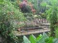 Bali - növényzet 01